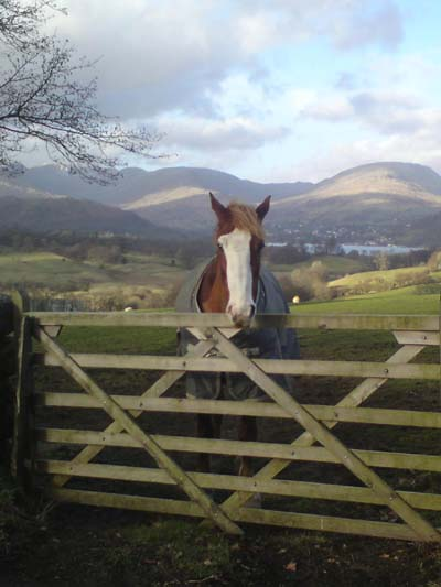 Jack the Lake District Horse